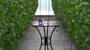 新型超音波ホッチキス「はるる」AUH30を使用してトマト農園でパック詰めを行いました。